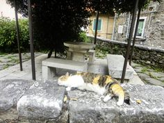 #catoftheweek ready for the #weekend I met this lovely pet during one of our tours in Colonnata near the #Carrara marble quarries. It seems tourists are not bothering her too much and she can take a nap in the shade. . . . . #wishversilia #tuscany #travel #travelpics #instatravel #instavacation  #ilovetravel #italygram #tuscanygram #italyphoto #visit_tuscany #visittuscany #tuscanybuzz #instatuscany #italyiloveyou #postcardfromtheworld  #traveling #vacation #instago #instagood #holiday…