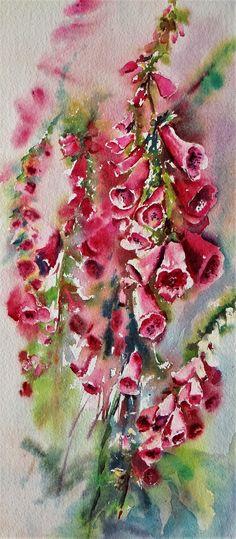 Red foxglove watercolor