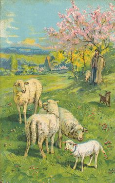 Easter postcard of lambs in a field