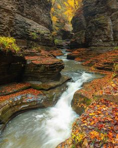 Watkins Glen State Park, Finger Lakes, Travel Bugs, Stunning View, Autumn Leaves, State Parks, Natural Beauty, Travel Destinations, Waterfall