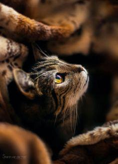 //kitty  cuteness #pets