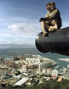 Gibraltar, Spain. Will never forget our visit here: we got chased by a monkey who tried to steal our snacks!