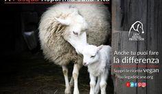 """Lega del Cane: """"A Pasqua festeggiate con un menu cruelty-free"""""""