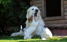 JRT puppy & tatra