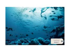 Club Med | The Divers