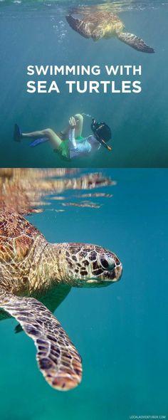 Swimming with Dozens of Endangered Sea Turtles in Derawan Islands Indonesia // localadventurer.com
