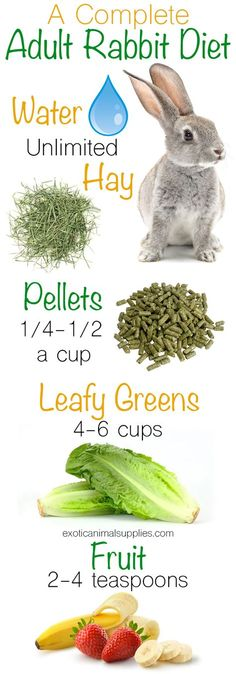 A complete adult rabbit diet. These are all the healthy foods to feed your bunny. Unlimited hay and fresh water. 1/4 - 1/2 cups of pellets per day. 4-6 cups of leafy greens. 2-4 teaspoons of fresh fruit. Click through for a complete list of safe veggies and fruits for rabbits. #rabbitcare