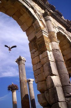 stork in Volubilis by christing-O-, via Flickr