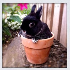 """One of my bunnies - this is """"Goose"""" ... his brother is named """"Maverick"""" :)"""