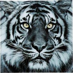 Tableau En Verre Face Tigre Kare Design - Taille : 80 x 80 cm Beautiful Cats, Animals Beautiful, Art Tigre, Tiger Artwork, Tiger Face, Kare Design, Tier Fotos, Mundo Animal, Canvas Pictures