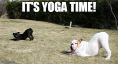 Yoga dog. My two cuties workin' it!  #dog #yoga #bulldog #staffordshirebullterrier #meme #fun #cute #puppies #downwarddog