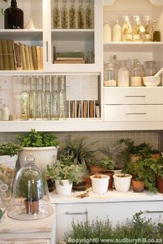 Herbs:  #Herbs. herbs in da house. in da dream kitchen                                                                                                                                                                                 More