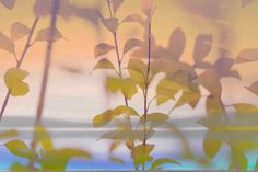 Large canvas artwork of natural plants and leaves. Tranquility IV - Marmont Hill