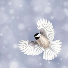 Chickadee in Snow Photography Print by Allison Trentelman