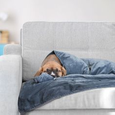 Canine Coddler: Your Dogs Relief From Anxiety!