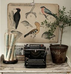 Antique typewriter and glass cloche displayed together