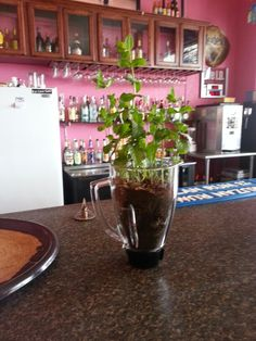 Reuse old blender for mint plant