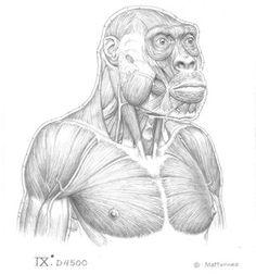 J.H. Matternes skull - Pesquisa Google