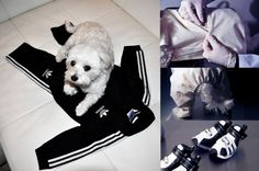Luxirare's Rocky DIY Adidas dog track suit (actual site isn't an actual tutorial, but she took enough pics of her transforming the baby track suit that an experienced sewer could probably figure it out)