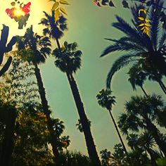 @ Jardin Majorelle - Marrakech / Morocco © @othmanoua