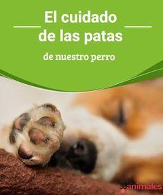 El cuidado de las patas de nuestro perro Las patas de nuestro perro son muy sensibles y necesitan de ciertos cuidados. En este artículo aprende algunos consejos que mejoran la salud de tu mascota.