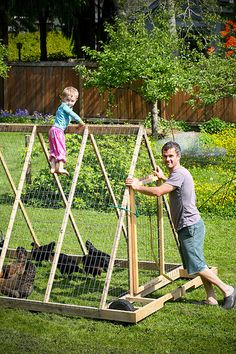 chicken tractor to set them foraging safely