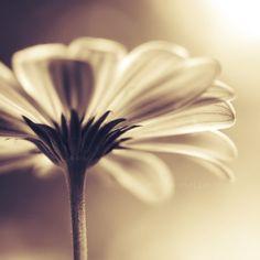 Beautiful Flowers Photography