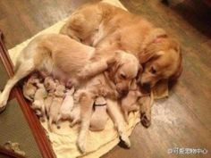 adorable doggie family #pets