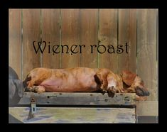 Anyone who has every been blessed to be owned by a Dachshund knows they love to bake in the sun.