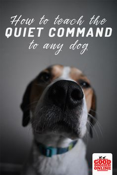 If you need to stop your dog barking all the time, try teaching your dog the quiet command. It is the best way to deal with excessive barking in any situation. Check out these easy steps and training tips here. #dogs #stopbarking #dogtraining #quiet
