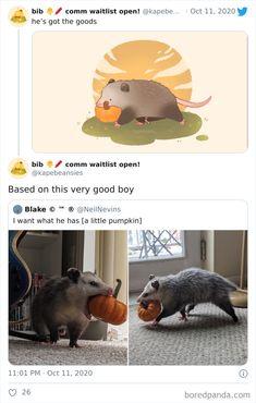 Animal Jokes, Funny Animal Memes, Funny Animal Pictures, Cute Funny Animals, Cute Baby Animals, Funny Cute, Animals And Pets, Animal Pics, Cute Animal Drawings