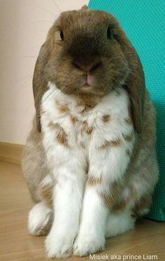 Pretty bunny
