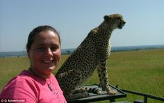 Chilling out: A traveller is snapped just metres from a calm-looking cheetah in Kenya