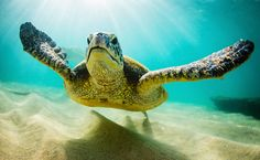 World's Largest Cruise Line Urged To Stop Supporting Cruelty To Sea Turtles | Care2 Causes