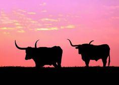 The Texas longhorn steer/sunset ! Longhorn Cattle, Longhorn Steer, Texas Sunset, Only In Texas, Flora, Texas Forever, Loving Texas, The Lone Ranger, Texas Pride