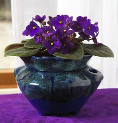 Purple Violet Plant to attract wealth  - Pinned by The Mystic's Emporium on Etsy