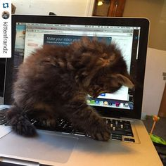We love this! Even Quaker kitties have a #mypennpath #Repost @kittenfrandz with @repostapp. ・・・ Making a gmail to kick off my career! Just thinking about the FUTURE ok!! Wow about to find such amazing jobs on Penn link amiright #myPennPath #futuremediamogul #coverletter @google @penncareerserv