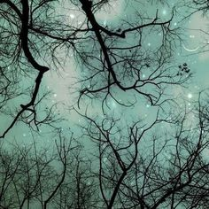 Smile - fantasy silhouettes of whimsical bare branches, stars, constellations space and a smiling moon at twilight - A magical winter photograph - fine art nature print (8x8)