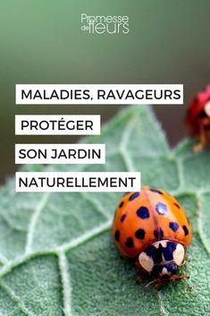 Jardin bio, jardin écologique : découvrez comment protéger votre jardin naturellement ! #jardin #jardinage #bio #naturel Agriculture, Plants, Gardening, Bugs, Handmade, Art, Gardens, Ladybugs, Courtyards