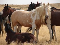 Stop BLM's Plan to Destroy Wild Horse Herd in Idaho | American Wild Horse Preservation Campaign