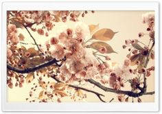 Tree Flowers Sepia HD Wide Wallpaper for Widescreen