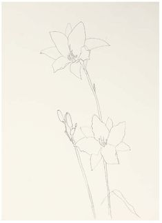 Ellsworth Kelly Lily, 1980 graphite on paper Works on Paper 30 x 22 in. x cm. Botanical Art, Botanical Illustration, Ellsworth Kelly, Continuous Line Drawing, Flower Sketches, Board Art, Flower Paintings, Art Journal Pages, Magazine Art