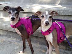 toy real life greyhound - Buscar con Google
