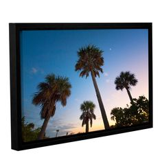 Trees At Dusk by David Kyle Floater-Framed Photographic Print on Gallery-Wrapped Canvas
