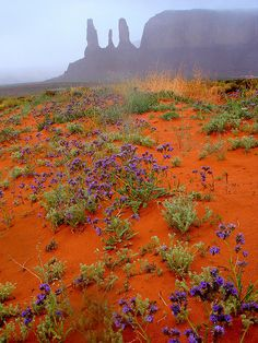 Monument Valley the BEAUTIFUL NIZONIH by Nihihiro & Shihiro, via Flickr, Arizona-Utah state line