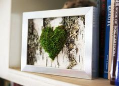 Real life moss art Only ships in USA & Canada though and not sure if i could bring it home on the pane :( Birch Bark and Moss Rustic Framed Art - Zero Care, Real and Preserved.