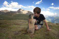 boy with alpine marmots 7