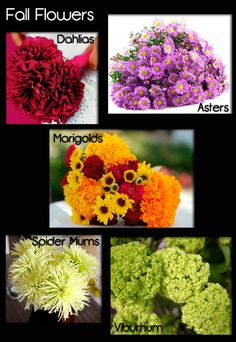 Fall Flowers - Seasonal Flower Guide - this is bridal - but good guide. Modern Wedding Flowers, Floral Wedding, Camo Wedding, Dream Wedding, Flower Names, My Flower, Flower Ideas, Flowers For You, Types Of Flowers