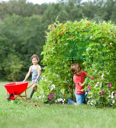 """Grow a lush, leafy dwelling right in your own backyard. It's a great way for children to observe nature blooming around them and to go green! Simply set up the supporting framework, plant seeds around the base, and watch as nature grows a living roof and walls up, over, and around it. Kit includes a green ground tarp and two packets of sweet pea seeds and Blue Lake bean seeds. (58""""L x 58""""W x 48""""H.) Adult assembly required. Fort Kit, Sweet Pea Seeds, Build A Fort, Green Ground, Living Roofs, Garden Tool Set, Kyoto Japan, Business For Kids, Kids Playing"""