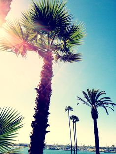 My favorite tree are palm trees